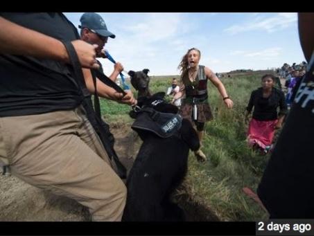 standingrockdogswomen