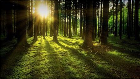 Forestw:Sun